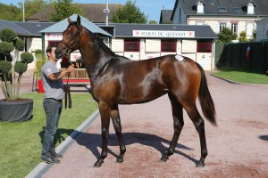 Deauville - 16/08/2014 - VENTE YEARLING ARQANA - 0011  F. MONSUN & SASUELA Vendu NERSES Tony  1 200 000 ?