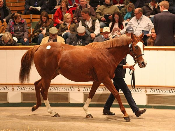 "Four Top Million at Tattersalls December Mare Sale HANKY PANKY was the star turn on the second day of the Tattersalls December Mare Sale, selling for 2,700,000 guineas on a day that also included the sale of Champion two-year-old TIGGY WIGGY for 2,100,000 guineas and the Oaks winner QUALIFY for 1,600,000 guineas. The second day of the sale saw a total of 162 lots sell for 27,657,000 guineas, at an average of 170,722 guineas and a median of 79,000 guineas. The GALILEO mare HANKY PANKY always looked one of the standout lots of the Tattersalls December Mare catalogue as the half-sister to Champion racehorse and sire GIANT'S CAUSEWAY as well as to YOU'RESOTHRILLING, the dam of the dual Guineas winner GLENEAGLES and Irish 1,000 Guineas winner MARVELLOUS. The daughter of MARIAH'S STORM was offered by Lady Carolyn Warren's Highclere Stud, in foal to DUBAWI on behalf of John Sikura. The Group placed five-year-old mare caught the attention of US agent Justin Casse, Turkish owner/breeder Ibrahim Araci as well as Fernando Diaz Valdez and John Warren, but it was Darley's John Ferguson who secured the mare with his bid of 2,700,000 guineas. ""It is a huge privilege to sell a mare such as this,"" said Lady Carolyn Warren, ""and we thank John Sikura for entrusting us with her. She is a beautiful mare and ticked every box. ""There were a lot of different parties interested, and a lot of different people bidding. We are very pleased that Sheikh Mohammed bought her, he is such a huge supporter of the industry."" Lot 2011: Hanky Panky (IRE) Lot 2011: Hanky Panky (IRE) Last year's Joint European Champion two-year-old filly TIGGY WIGGY was the second highest price for the day when knocked down to MV Magnier for 2,100,000 guineas. The filly lit up the racecourse with her blinding speed, recording successes in the Group 1 Cheveley Park Stakes and Group 2 Lowther Stakes amongst her six victories in her freshman year. The daughter of KODIAC out of the KHELEYF mare KHELEYF'S SISTER, was also placed in the Group 1 1,000 Guineas earlier this year for trainer Richard Hannon. ""She was a great race filly, and she will go to Galileo,"" said MV Magnier. ""She is a lovely mare and the Hannons have done a very good job with her."" MV Magnier secured the filly after seeing off Anthony Stroud and John Ferguson as well as Mandore International's Nicholas de Watrigant and Japan's Northern Farm."